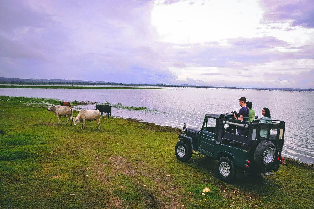 Atrakcje Sri Lanki safari