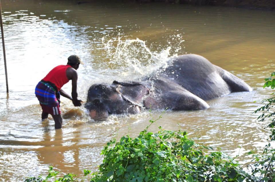 Sri Lanka - kąpiel słonia