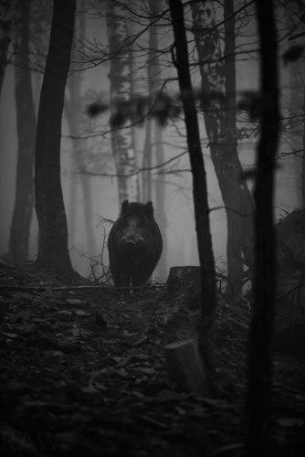 beskidy-dziki