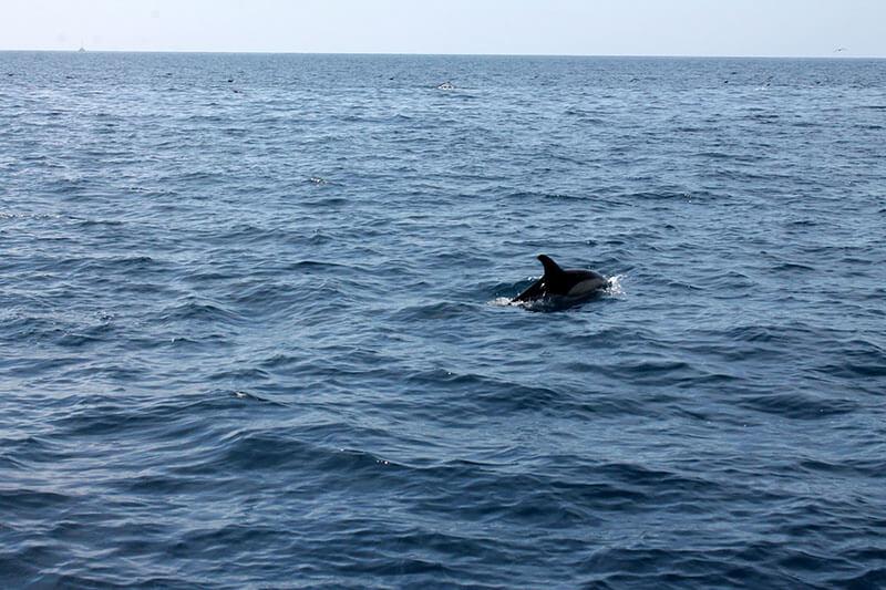 rejs statkiem z delfinami - madera