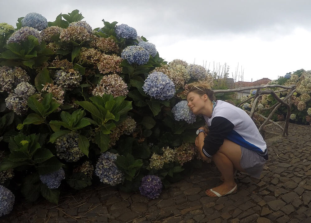 Atrakcje Madery - Sanstana - hortensje