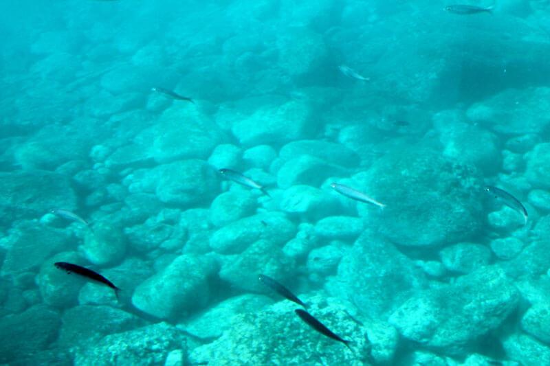 Madera - ryby pływające przy skałach
