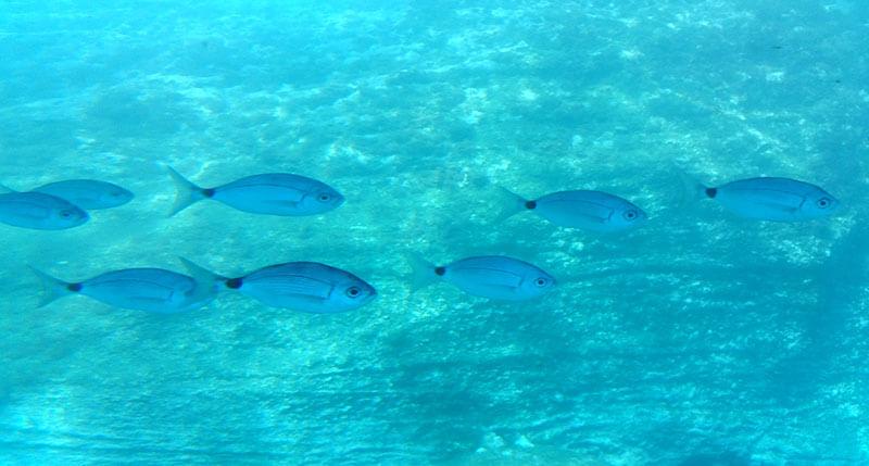 Madera - podwodne życie