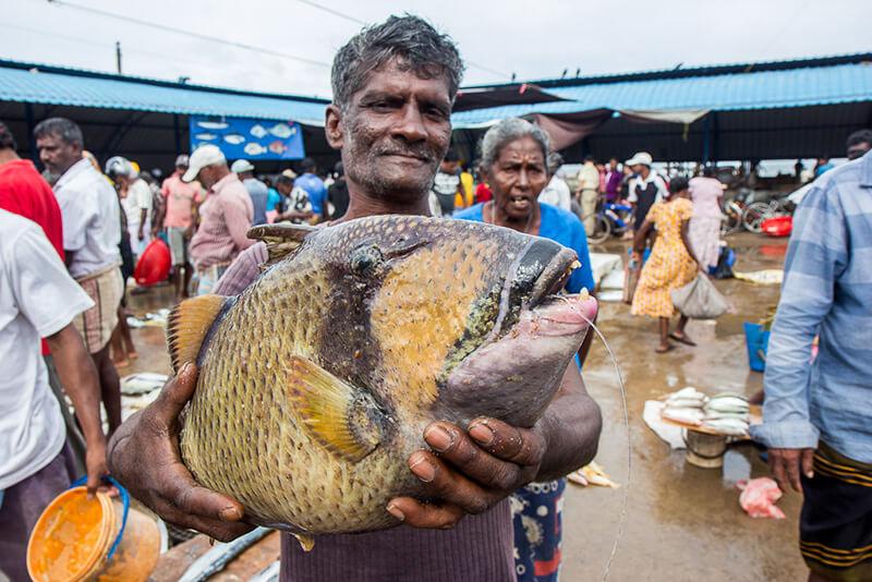Rybny market Negombo Sri Lanka
