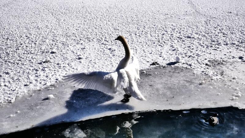 Ptaszysko na jeziorze