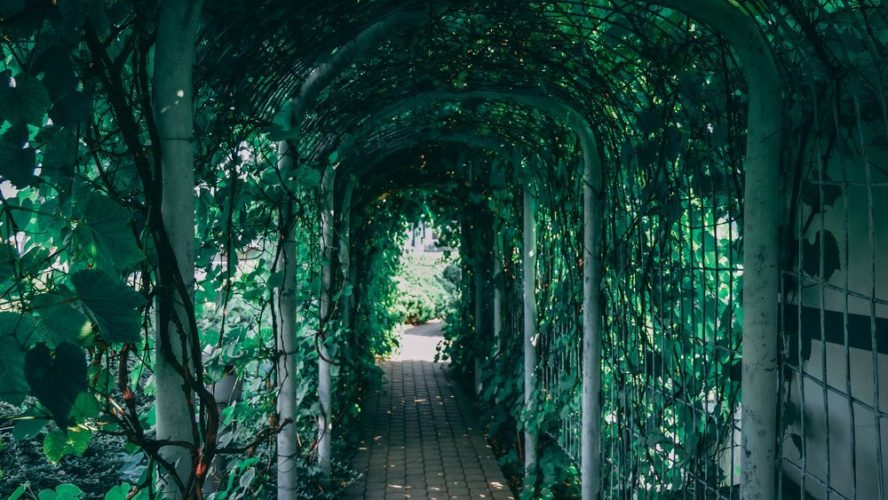 zaczarowany-ogrod