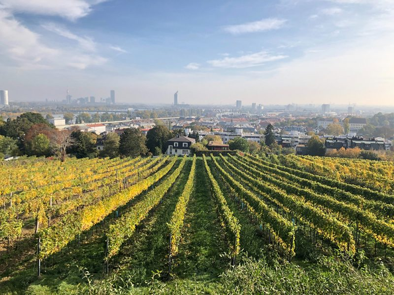 austriackie wino