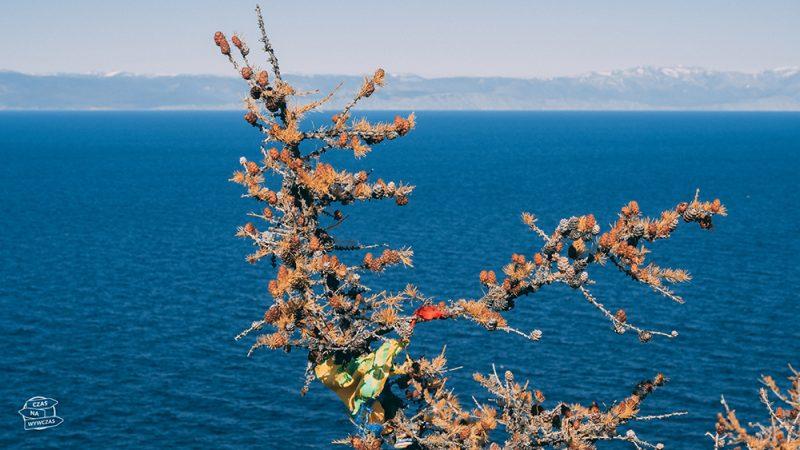roślinność na wyspie nad bajkalem