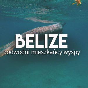 Podwodne zwierzęta na Caye Caulker Belize