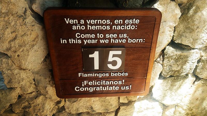 Liczba flamingów w Xcaret