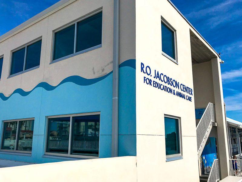 klinika delfinów