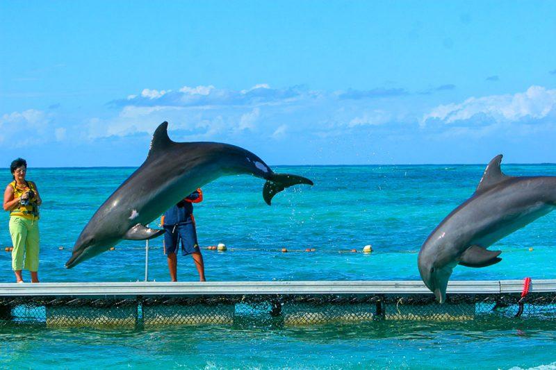 wyzysk delfinów