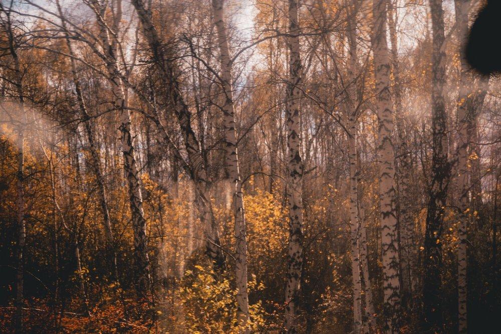 jesien-transyberyjsa