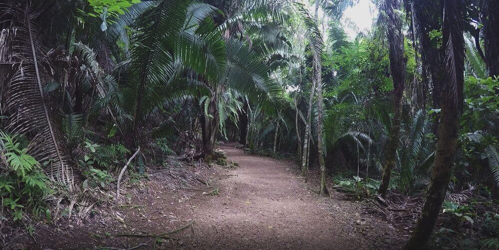 belize-lasy-deszczowe