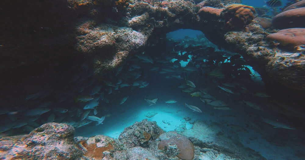 snorkeling-belize