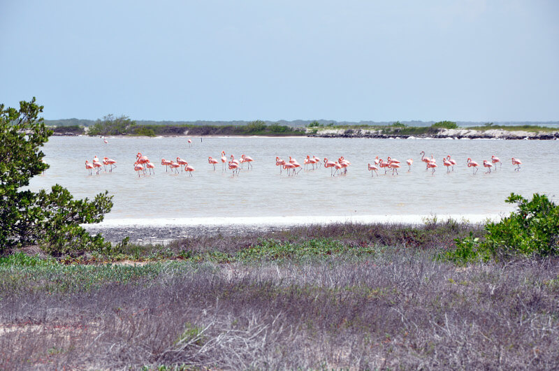 Las-Coloradas-flaminigi
