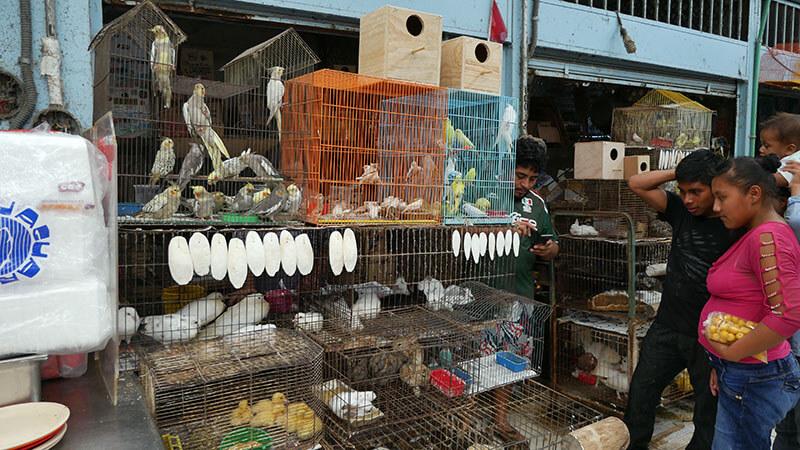 Bazar - Municpal Market