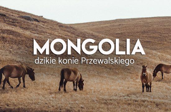 mongolia - atrakcje - konie