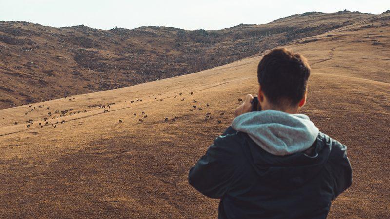 konie Przewalskiego - atrakcja Mongolii