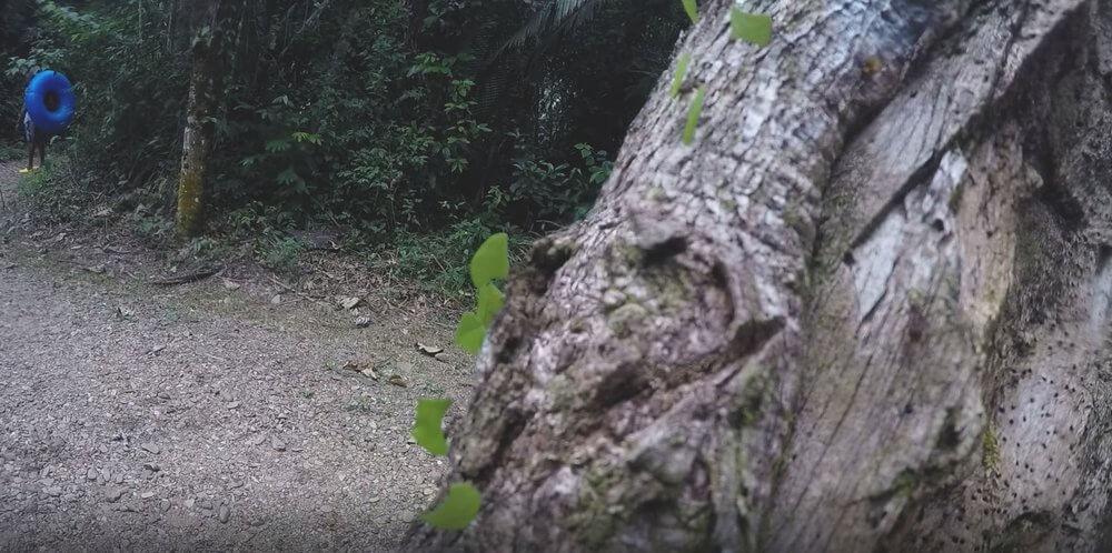 las-deszczowy-spacer