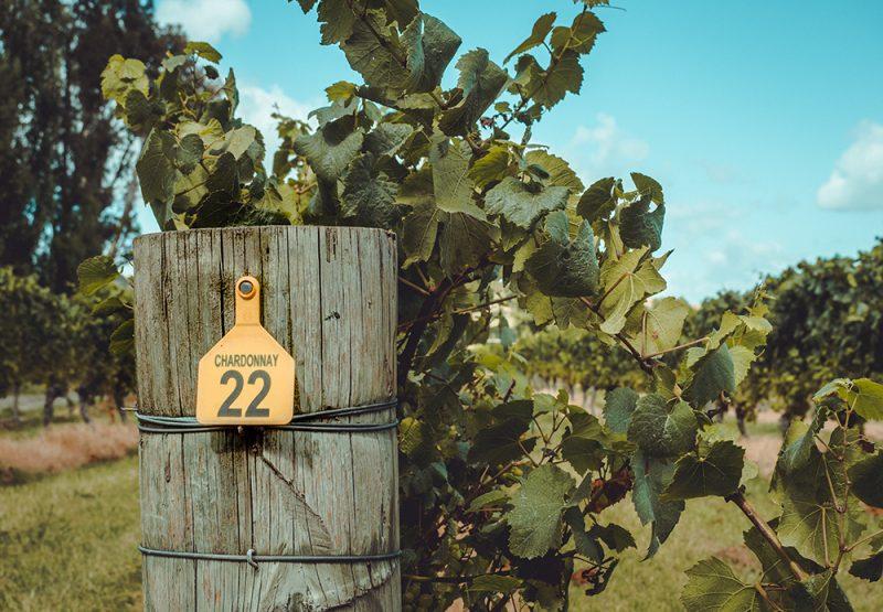 winnice w Nowej Zelandii