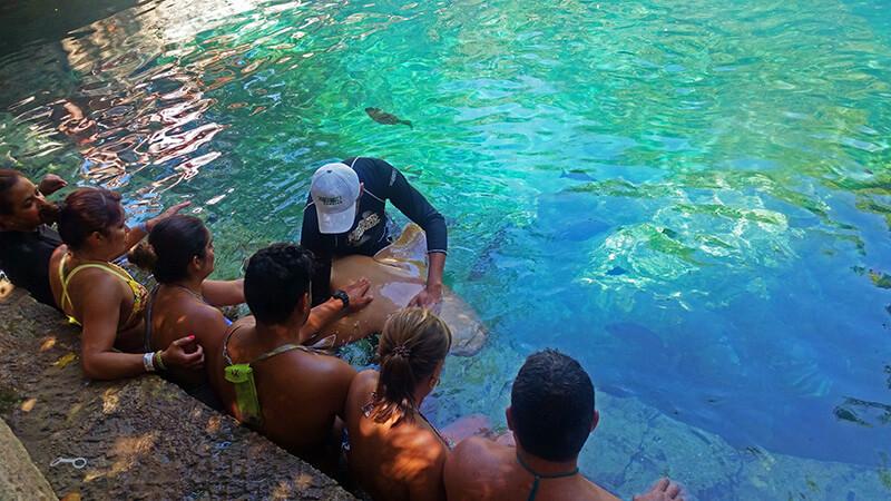 pływanie z rekinami - atrakcja xcaret