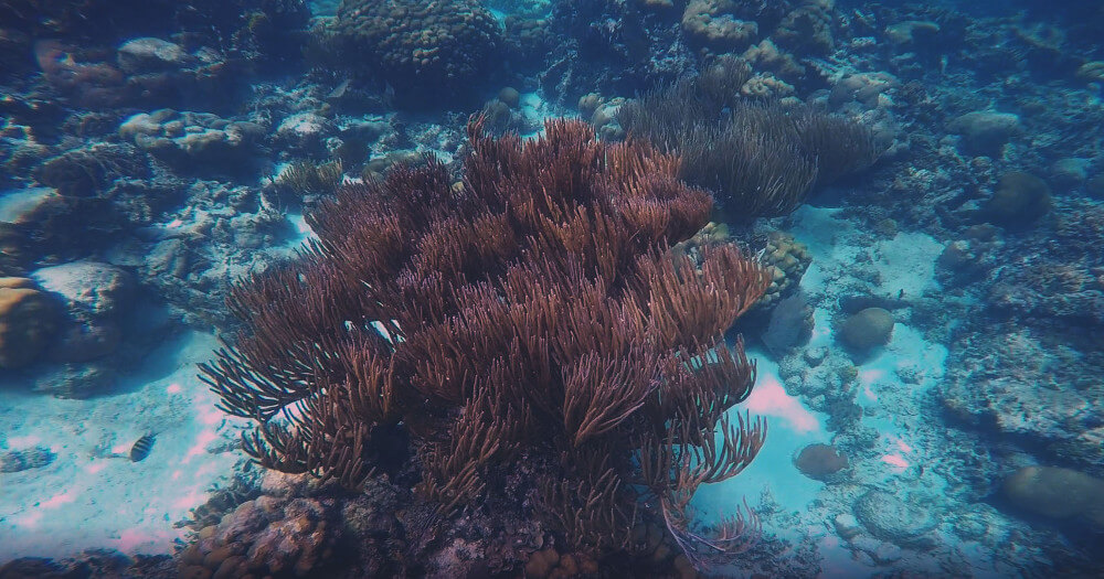 caye-caulker-koralowce