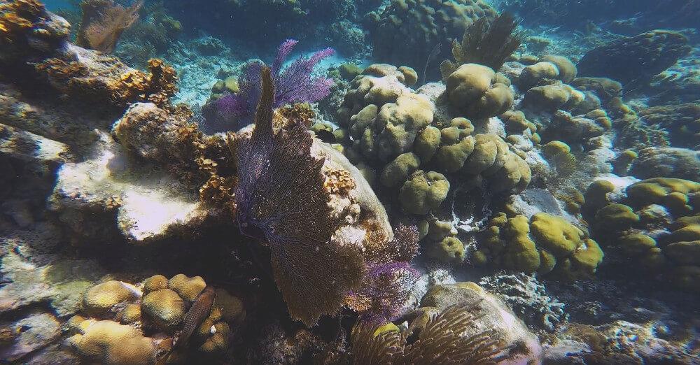 koralowce-rafa