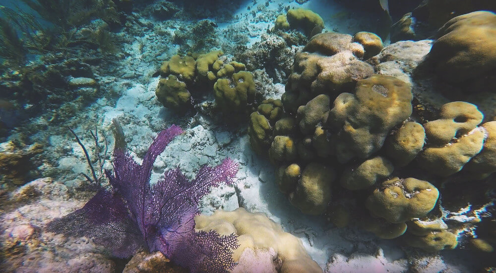rafa-koralowa-belize