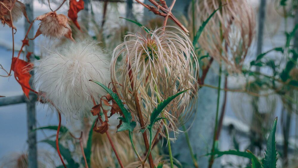 roślinność-buw