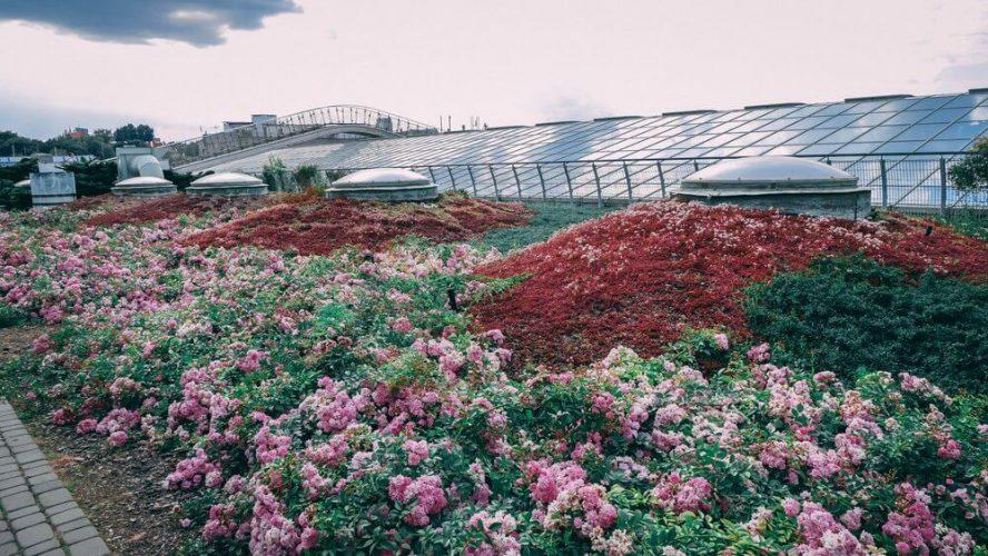 kwiaty-park-buw
