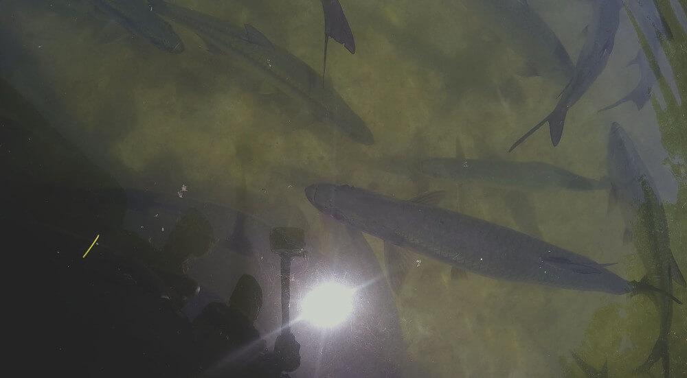 ryby-przy-brzegu
