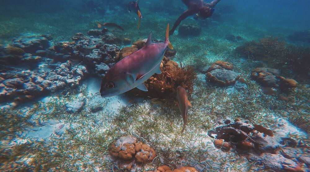 caye-caulker-rafa-koralowa