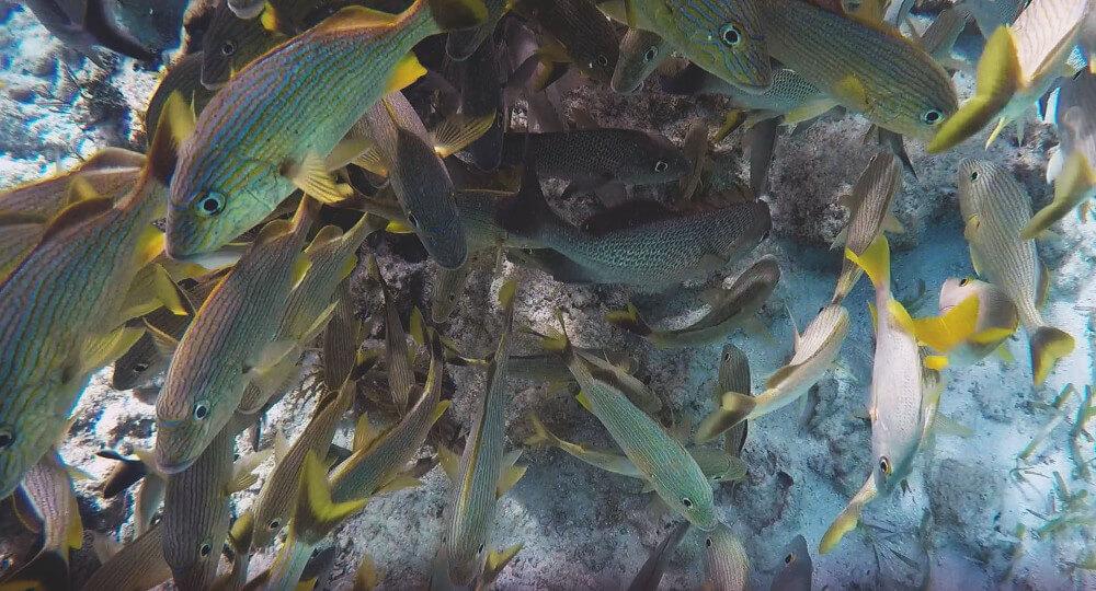 belize-ryby