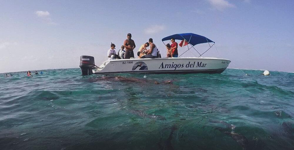 karmienie-rekinow
