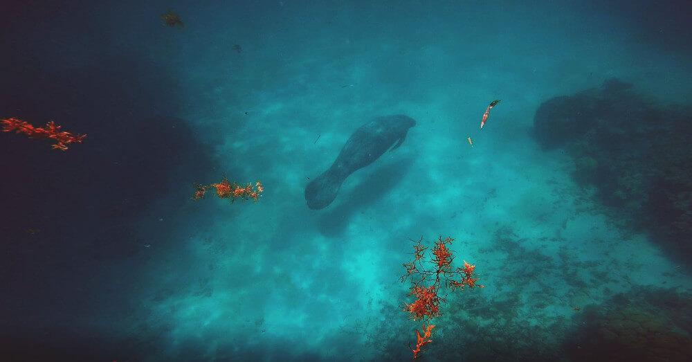 manat-rafa-koralowa
