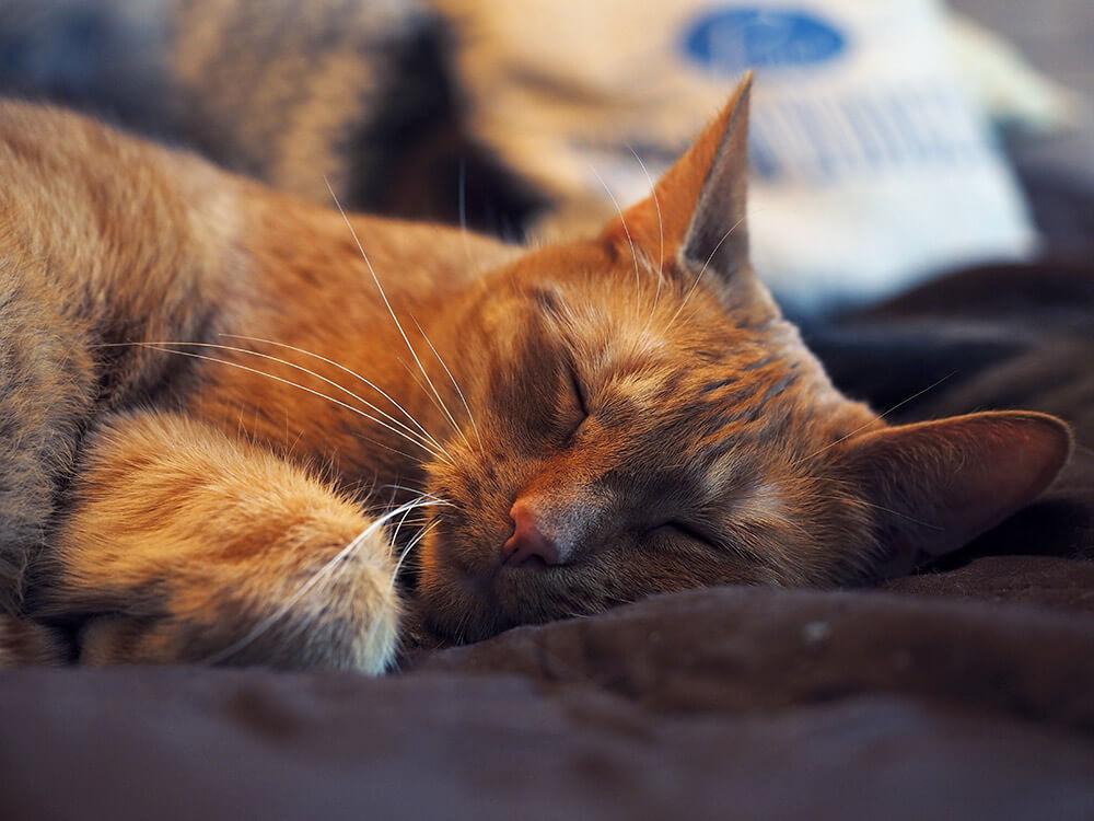 zdjęcia rudego kota