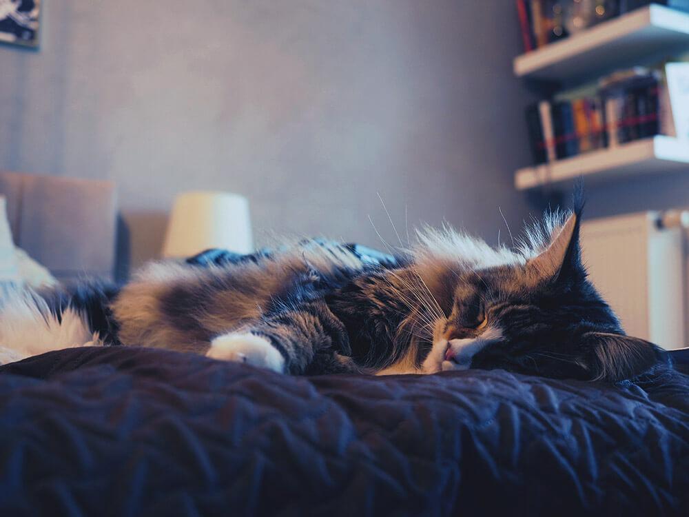 zdjęcia śpiącego kota