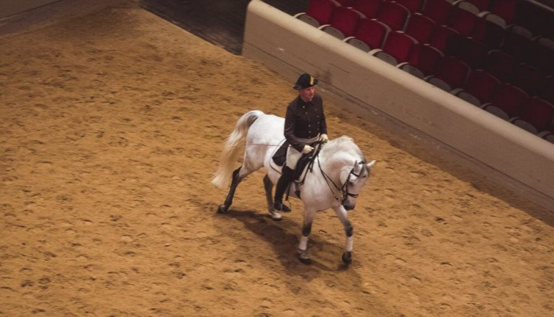 konie-szkola-jazdy