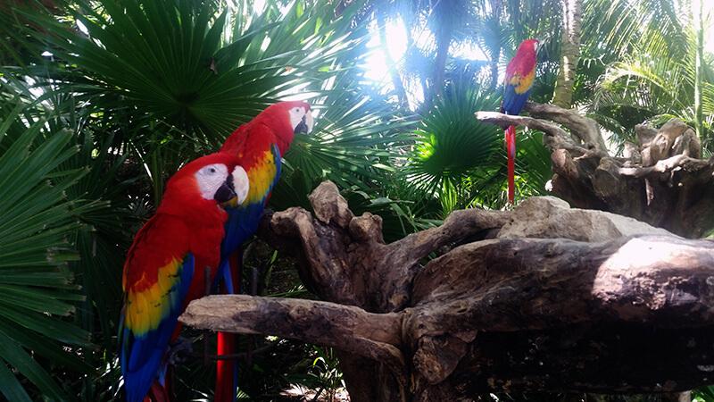 Papugi w parku Xcaret - Meksyk