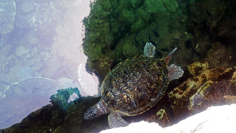 Żółwie w Parku Xcaret